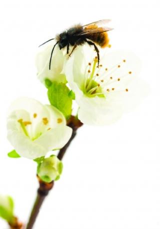 Descaso com as abelhas: Ameaça ÃÆ' humanidade!