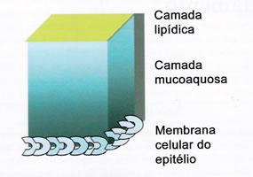 """""""CAMADAS DA L�GRIMA� - Estrutura ilustrativa do fi lme lacrimal indicando, acima da membrana celular do epitélio da córnea, uma camada com muco de densidade regressiva à medida que se afasta da superfície e uma camada lipídica mais superfi cial."""