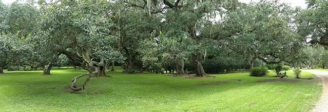 Enorme ÃÂ¡rea de preservação da Tabasco, um dos atrativos da fÃÂ¡brica do famoso molho de pimenta.