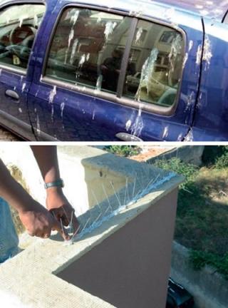 Acima: um exemplo dos problemas causados pela infestação de pombos domésticos. Abaixo: umas das propostas para solucionar este problema.