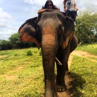 Kanchanaburi elephant Village.