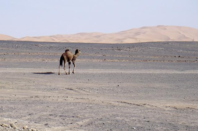 O Deserto do Saara em Merzouga.