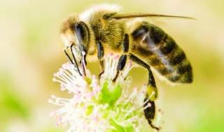 Descaso com as abelhas: Ameaça a humanidade